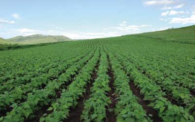大豆的种植时间和收获季节