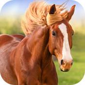 那匹马ios版